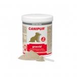 Canipur Gravid - alates tiinuse 5. nädalast